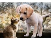 Cagnolino e gattino