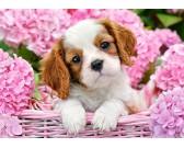 Cagnolino nel cesto roso