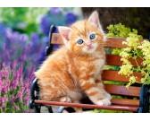 Gattina rossa