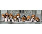 Beagle - PUZZLE PANORAMICO