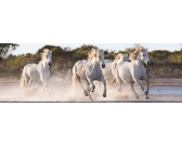 Corsa dei cavalli - PUZZLE PANORAMICO