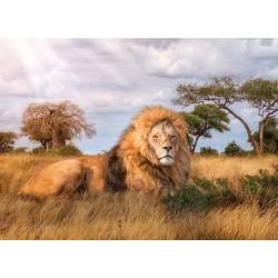 Re di savana