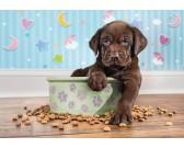 Cibo per cucciolo - PUZZLE PER BAMBINI