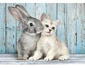 Coniglio e gatto