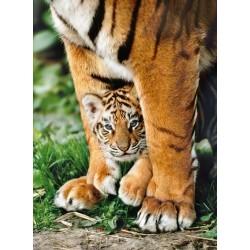 Cucciolo di tigre bengalese