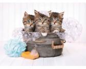 Tre gattini
