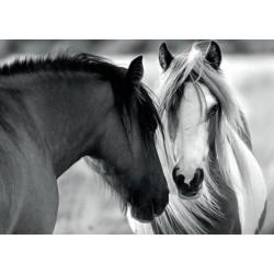 Cavalli bianchi i neri