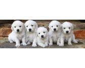 Cinque cagnolini - PUZZLE PER BAMBINI