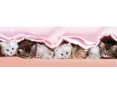 Gattini sotto la coperta - PUZZLE PER BAMBINI