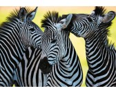 Tre zebre