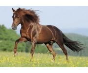 Cavallo sul prato