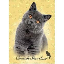 Gatto britannico - MINI PUZZLE