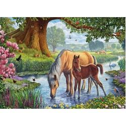 Cavalli nell'acqua