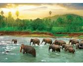 Elefanti nell'acqua