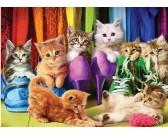 Gatti nell'armadio