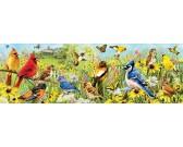Uccelli colorati - PUZZLE PANORAMICO
