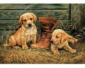 Cagnolini con la scarpa