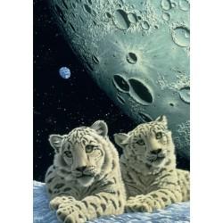 Leopardi bianchi