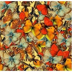 Mondo delle farfalle