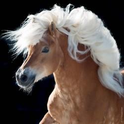 Cavallo - MINI PUZZLE