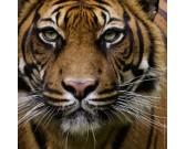 Tigre - MINI PUZZLE