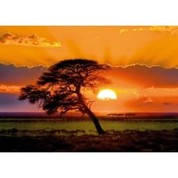 Albero durante il tramonto del sole