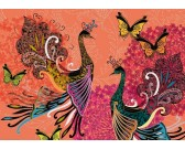Pavoni e farfalle