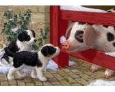 Cagnolini con il porcellino