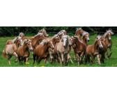 Branco di cavalli - PUZZLE PANORAMICO