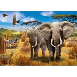 Savana africana