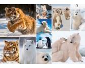 Animali artici