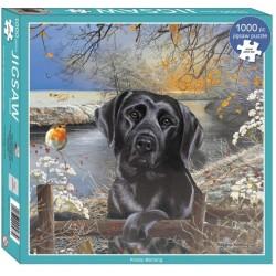 Labrador nero