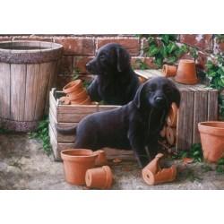 Cuccioli di labrador neri