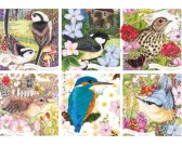 Uccelli della nostra natura