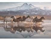 Cavalli selvaggi di Cappadocia