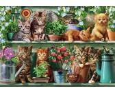 Gatti sugli scaffali