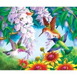 Colibrì colorati