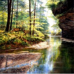 Foresta tranquilla