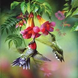 Due colibrì
