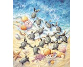 Piccole tartarughe