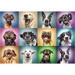Cani allegri