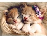 Gattine addormentate